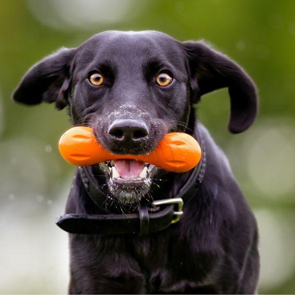 Dog Training School