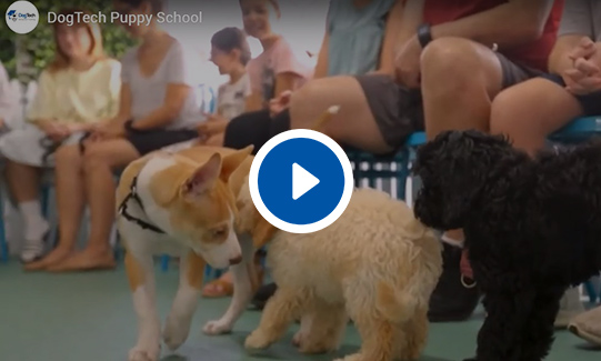 DogTech® Puppy School Video