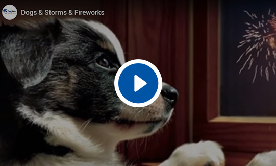 Dogs & Storms & Fireworks Video