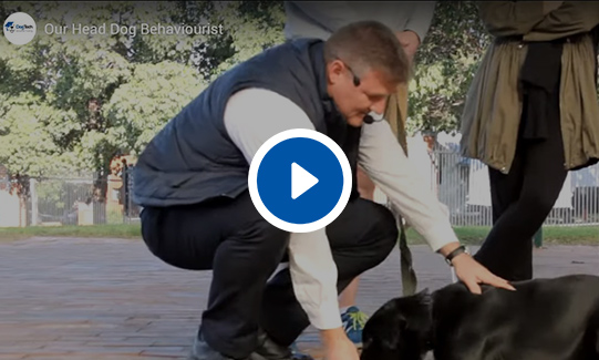 Our Head Dog Behaviorist Video
