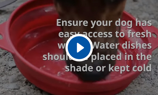 Keeping Your Dog Safe in Summer Video